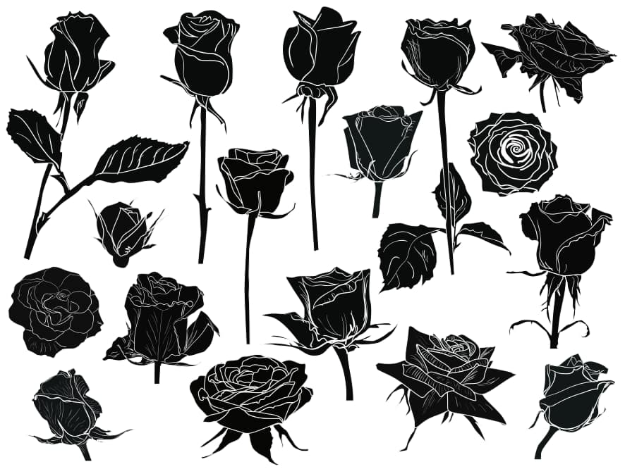 black and white roses
