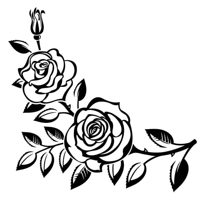 vector rose