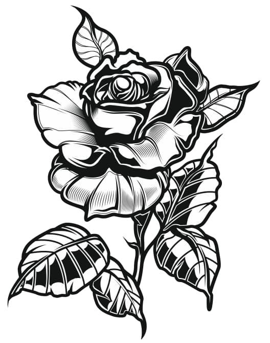 black rose tattoo