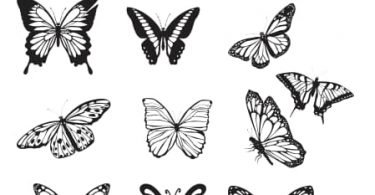 butterfly vector download