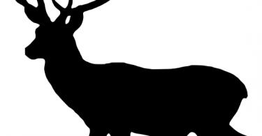 vector deer