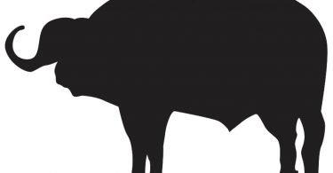 Buffalo Silhouette